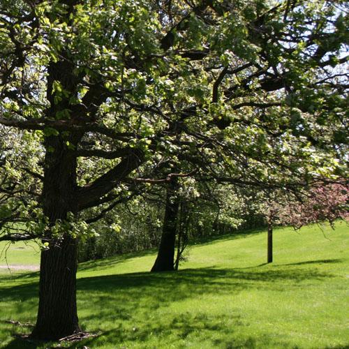 Spring in Pamela Park