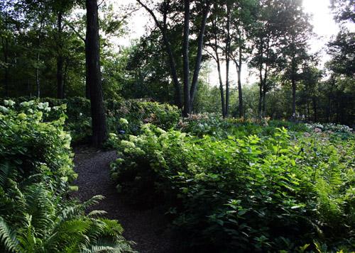 Canoe Bay Organic Garden Summer 2015