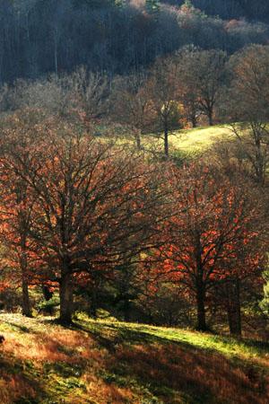 November trees_edited-1