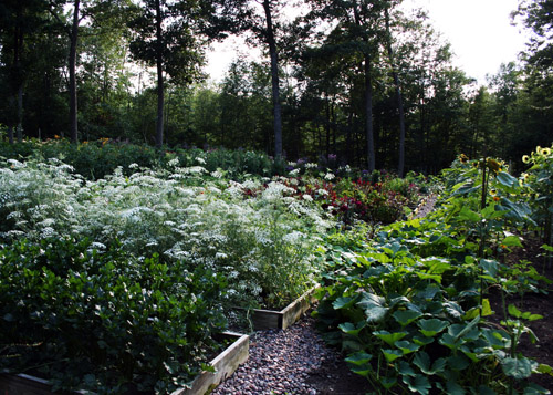 Canoe Bay Flower and Veggie Garden Summer 2015